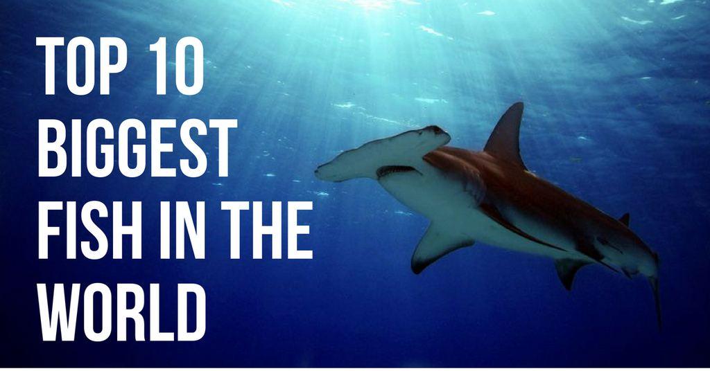 top 10 biggest fish