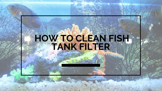 How to Clean Fish Tank Filter