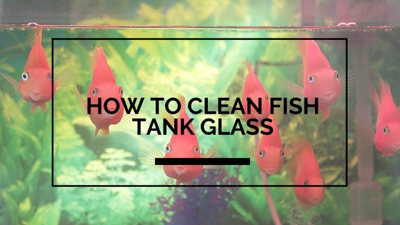 How to clean fish tank glass