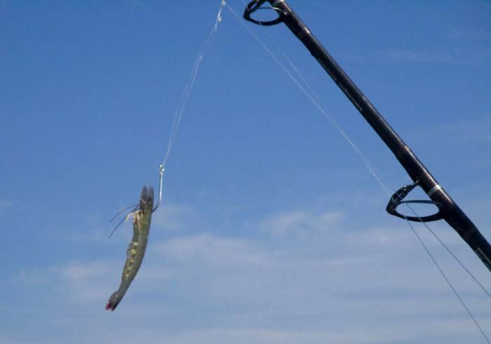 Bottom-Fishing
