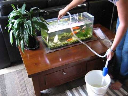 Clean-Fish-Tanks