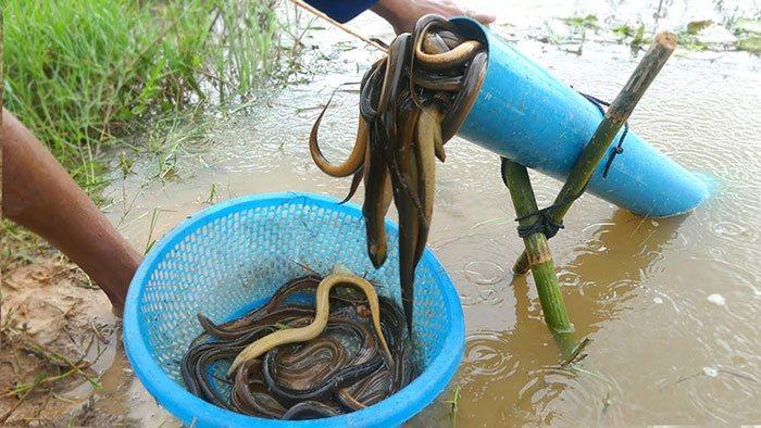 Eel-Traps