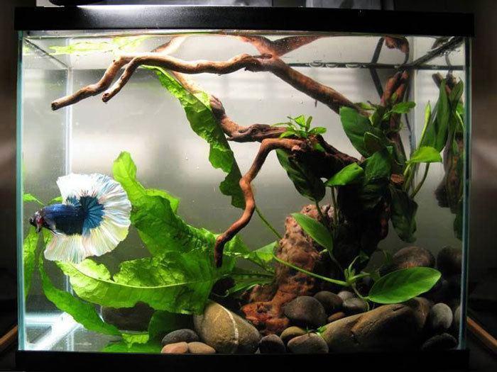 Fish-Tank-Glass-clean