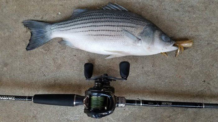 Fishing-Tip
