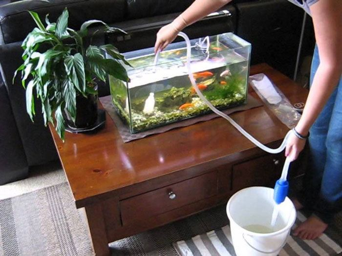 How-To-Clean-Fish-Tank-Gravel