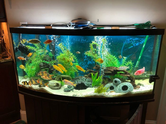 How-To-Clean-Fish-Tanks