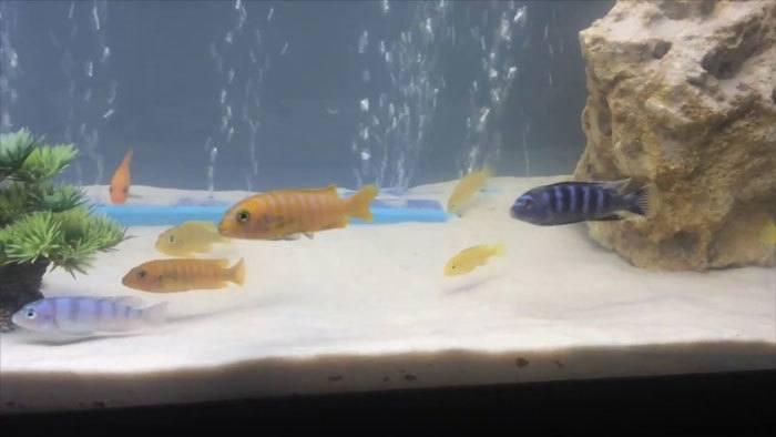 Personal-Aquarium