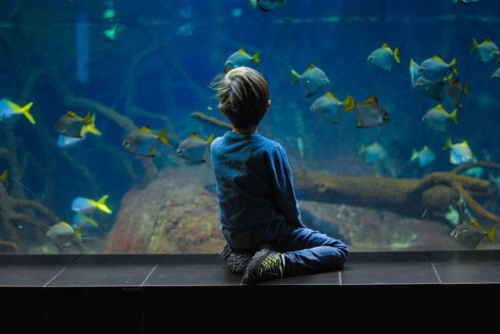 Public-Aquarium-or-Aquatic-Zoo