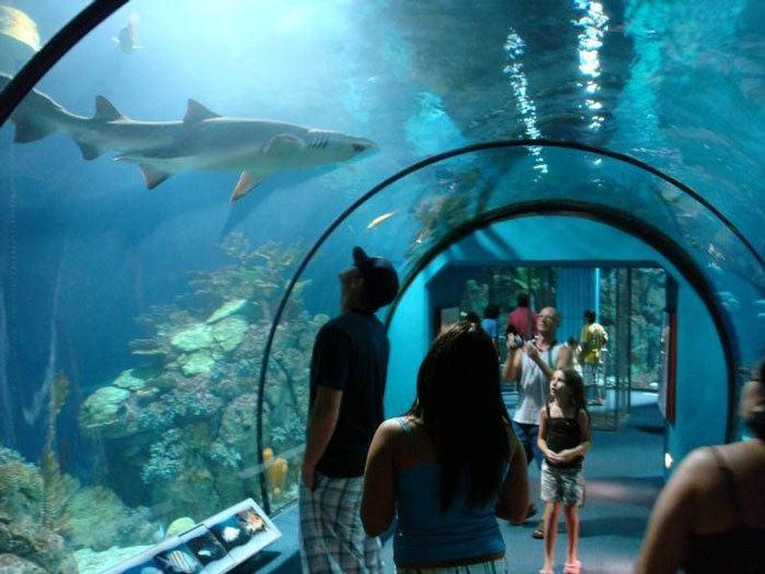 Public-Aquarium