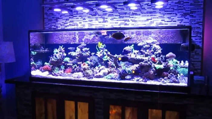 Saltwater-fish-tanks