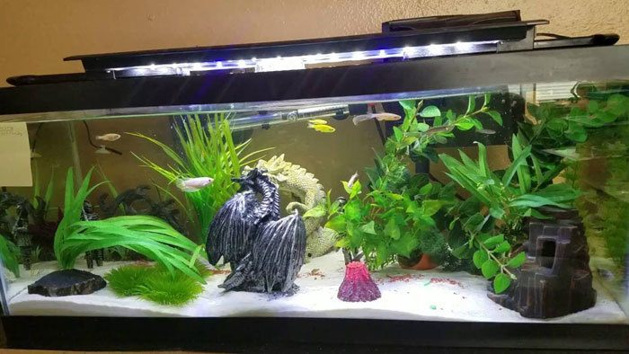Types-of-Fish-Tank