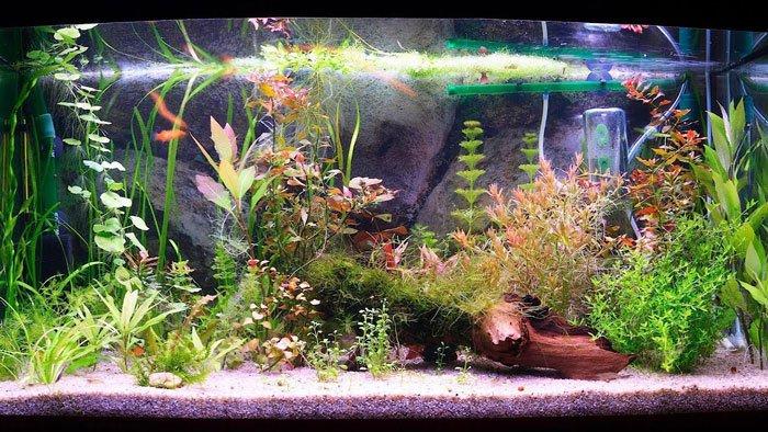 fish-tank-Filters